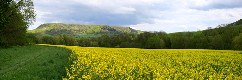 Rape field, Jena